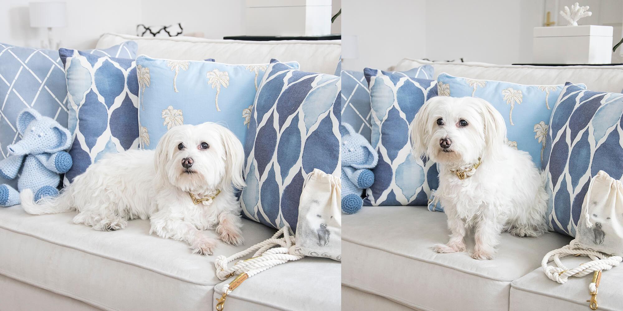 Baby-Blue: Trendige Hunde-Accessoires