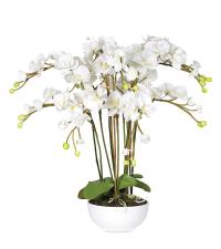 großzügiges, weißes Orchideengesteck in weißem Topf