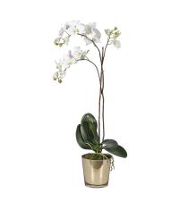 weiße, schmale Orchidee in zartem, goldenen Topf aus Glas