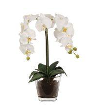 zarte, weiße Orchidee in klarem Glastopf