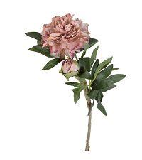 langstielige Pfingstrose in zartem Rosa