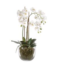 großzügiges weißes Orchideengesteck mit Moos in bauchiger Glasvase