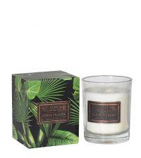 erfrischende Duftkerze mit tropischer Verpackung, Citrus & Verbena