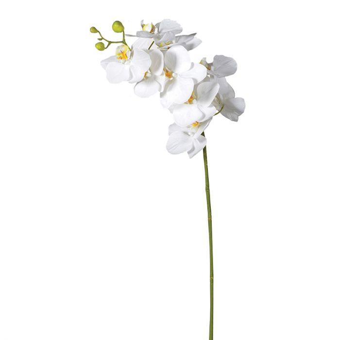 Langstielige Orchidee Mit Vielen Bluten Hohe Kunstblume Weiss